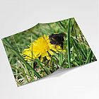 Bumblebee A6 Notebook