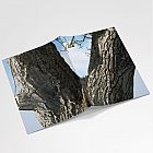 Walnut Tree Notebook